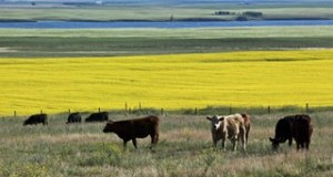 BCRC: Questioning the beef industry's water use