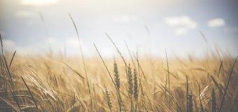 Heat Wave Concerns Farmers