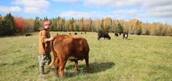 BCRC: Producers share ideas for developing safe and relatively economic pastures with greater longevity