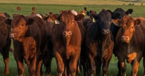 BCRC: It can pay exponentially to have a precision rancher mindset