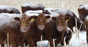 BCRC: Time for a Back-Up Plan – Managing the Impacts of Drought in the Winter