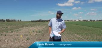 Farming Smarter: Precision Planting Canola
