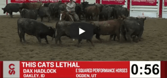 VIDEO: The best runs from the 2018 Calgary Stampede Cutting Horse Futurity