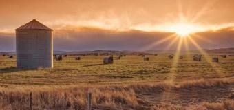 Alberta Livestock Expo takes centre stage
