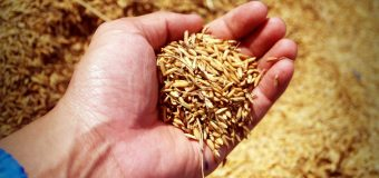 Safely storing grain long-term after a wet harvest