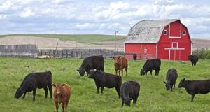 BCRC: Five producers share ideas that have made their farms and ranches more efficient