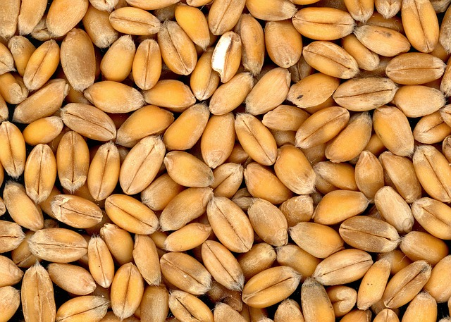 """What is a """"good"""" grain price? And would you know it if you saw it?"""