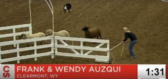 Auzqui takes top spot in World Stock Dog competition at Calgary Stampede