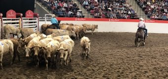 Strangers band together to win 7 Class – Team Cattle Penning title at Calgary Stampede
