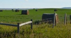 BCRC: Silage Cost of Production