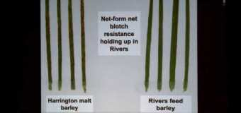 Farming Smarter: Fine-tuning cereal disease management