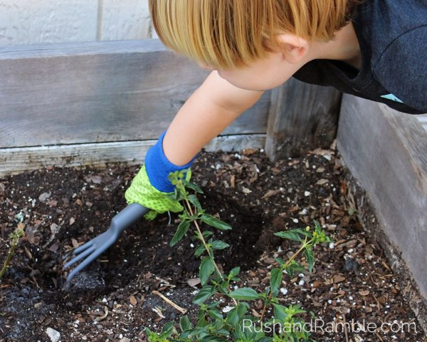 Planting the Butterfly Garden | Milkweed, Monarchs and Masterpieces: The Tale of a Preschooler and His Butterfly Garden