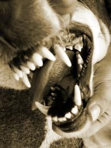 Orange County Dog Bite Lawyers - mean dog