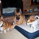 Dougs-Family