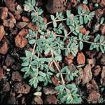 killing weeds and fleas-https://www.russellfeedandsupply.com