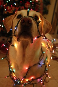 Dog Safe Christmas Tree