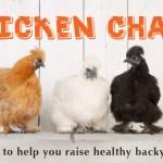 Argyle_ChickenChatSlider.jpg