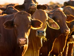 Russell Feed's 23rd Annual Cattle Owners Seminar