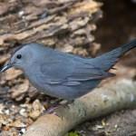 Wild Bird Migration in DFW
