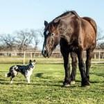 Russell Feed Pet Photo Moe & Big John