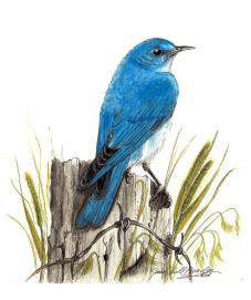 Artwork by Jane Beasley, Birds & Beasleys
