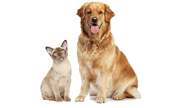 Pet Russell Feed Supply