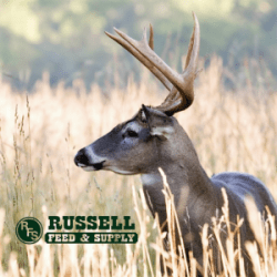 Wildlife :: Russell Feed & Supply