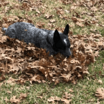 Russel Pet photos (10)
