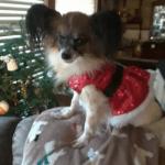 Russel Pet_cap photos (17)