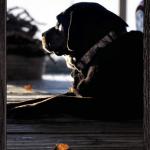 Russel Pet_cap photos (29)