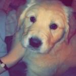 Russell Pet of the Week Aspen
