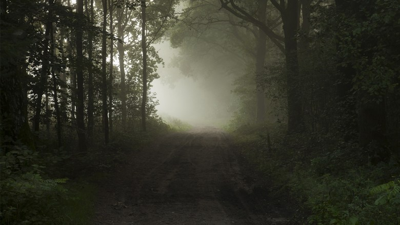A road in the forest: squeeze all you can out of the time you have.