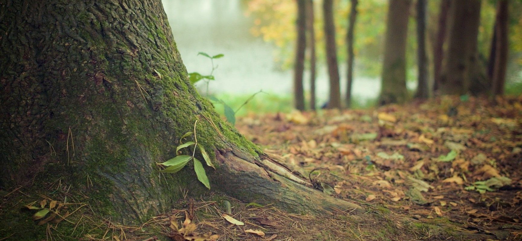 Should Christians Care about Earth Day?