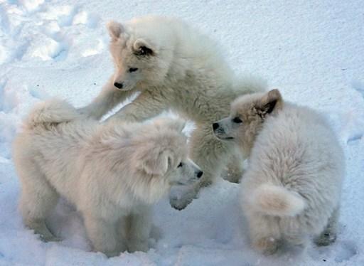 puppy_play