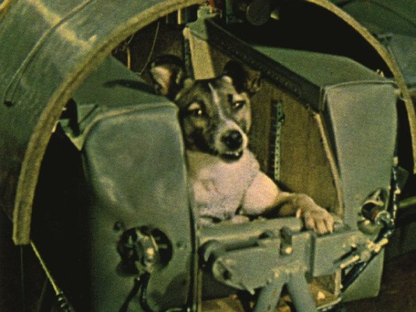 Laika inside the sputnik