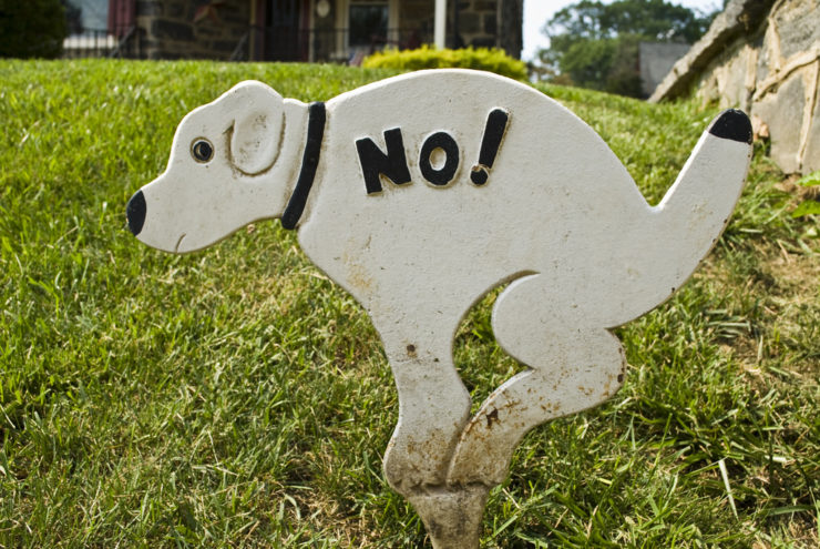 no dog poops