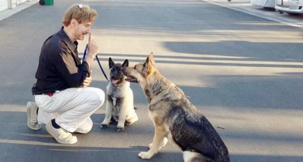 dog training language