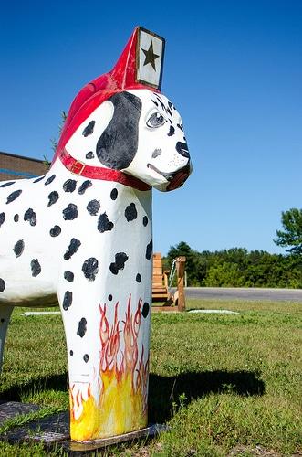 Dalmatian - a fire department mascot