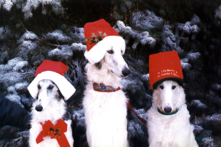 borzoi christmas photo