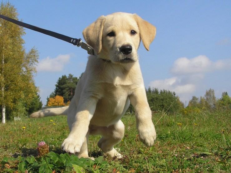 puppy potty training photo