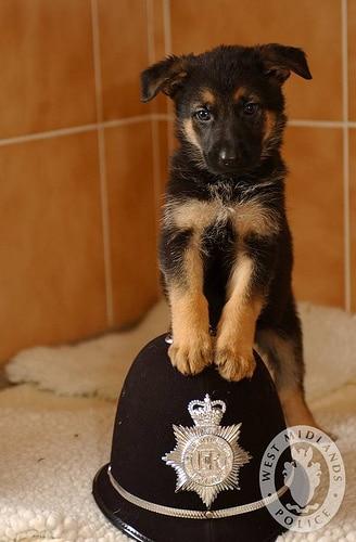 police puppy photo