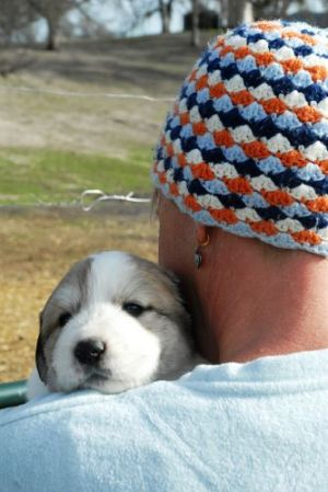 Great Pyrenees puppy sale