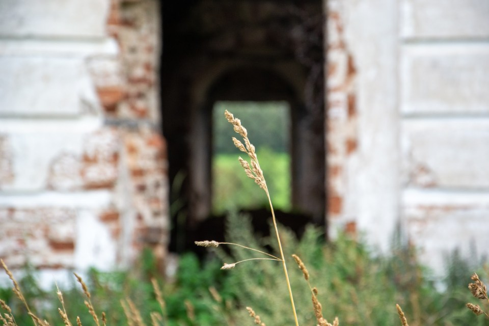 grass and old brick building