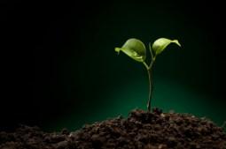 new-life-plant