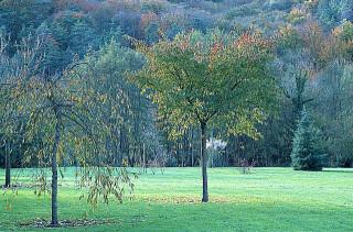 la duree de vie des arbres