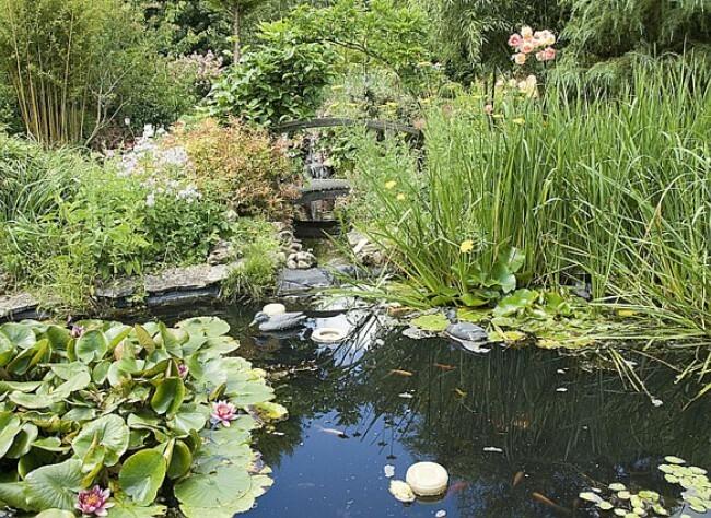 comment amenager un bassin dans son jardin