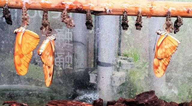Vlinders uit de cocon - Verandering