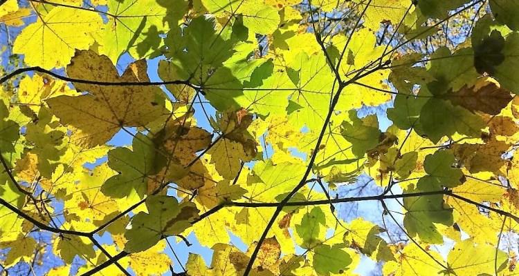 Bladeren - mag je even niets doen? Staren naar een boom bijvoorbeeld.