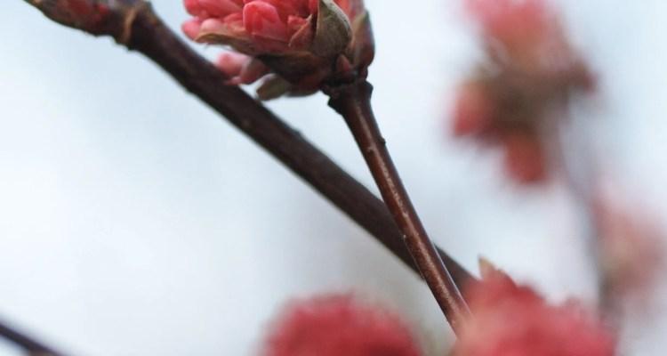 Roze bloemknopje - Hoe vaak gebruik je het woord 'even'?