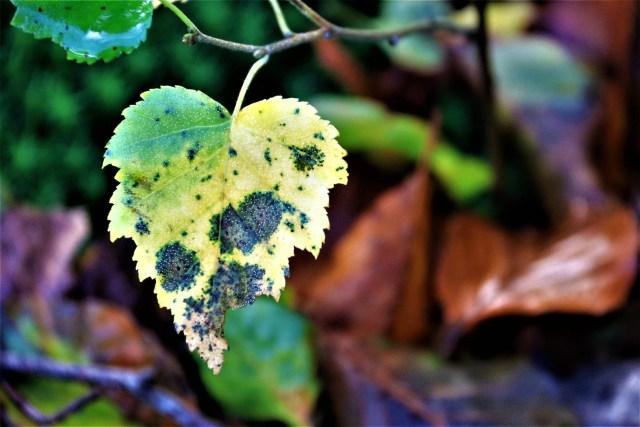 Herfstblaadje met stukje eruit - Wees lief voor jezelf - Rust in mijn hoofd coaching